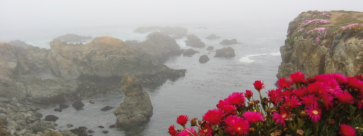 Flowers on the Mendocino cliffs